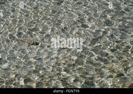 Continuous ripples in clear shallow water. - Stock Image