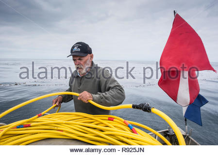 A deckhand winding up an oxygen hose for a diver on a fishing boat off the coast of San Diego, California, USA - Stock Image