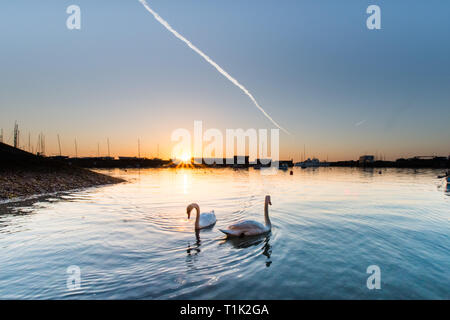 Penzance, Cornwall, UK. 27th Mar, 2019. UK Weather. Feeling cooler than yesterday, but still a glorious sunrise at Penzance harbour, with these inquisitive swans coming to meet the photographer at the waters edge. Credit: Simon Maycock/Alamy Live News - Stock Image