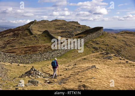 Hill-walker by meandering drystone wall along the crest of Lingmoor Fell, Cumbria, UK - Stock Image