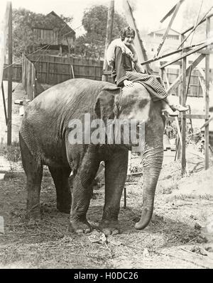 Elephant with someone on his mind - Stock Image