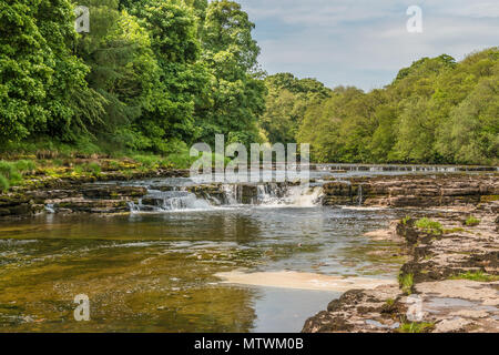 The river Ure, looking upstream from Lower Falls, Aysgarth, Wensleydale, Yorkshire Dales National Park, UK in spring sunshine - Stock Image