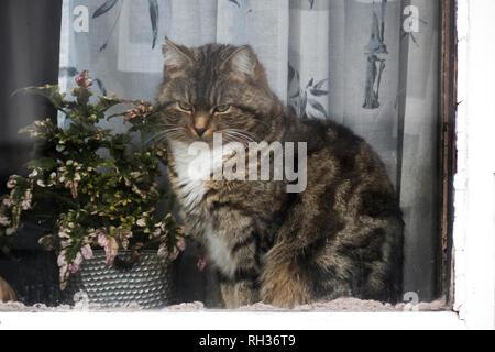 Cat looking through window - Stock Image