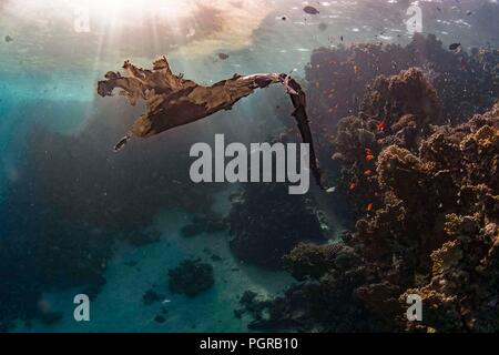 A piece of plastic bag shaped like a bird floats above a coral reef - Stock Image