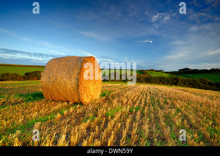 A Bale of  hay in a field of stubble lit by early morning sunlight - Stock Image