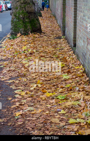 Autumn leaves covering a pavement in Cambridge, UK - Stock Image
