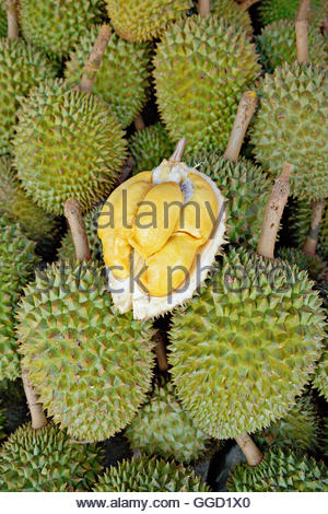 botany, Durian fruit at market. This spiny fruit is peculiar: some people literally can't stand the smell (let - Stock Image