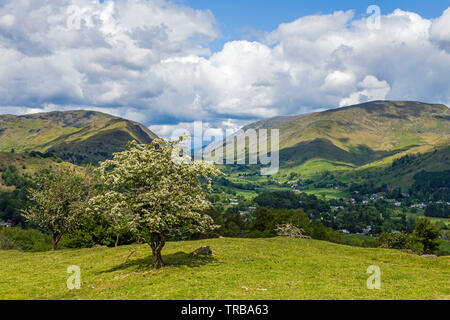 Looking to Dunmail Raise from Hammerscar Plantation in the Lake District National Park - Stock Image