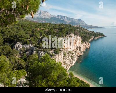 Pine tree forest and sea landscape on Makarska riviera in Croatia - Stock Image