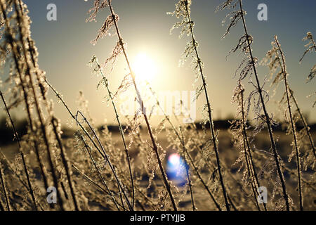various objects of the winter season and lanscape in the best of this wonderful period - Stock Image