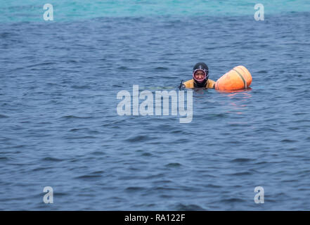Diving lady of Jeju in action.  Women coming back up for air, before heading back under again - Stock Image