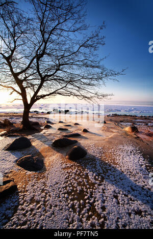 A tree without leaves at the very edge of a sandy beach with stones by a sailor against a blue sky in December - Stock Image