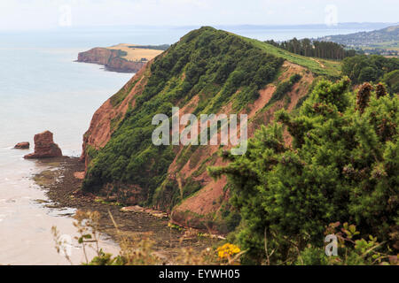 Hern Point Rock from High Peak, on the South West Coast Path, just above Sidmouth and looking towards Ladram Bay. - Stock Image
