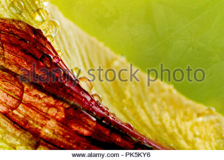 Leaf With Water Drops - Stock Image