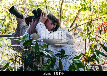 Birdwatchers and photographers searching for wildlife - Stock Image