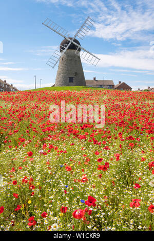 Wild flowers, including daisies and poppies, growing in front of Whitburn windmill, north east England, UK - Stock Image