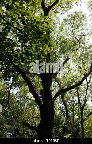 Close-up view of  the wooded area in the Warren Country Park, below the East Cliffs, Capel-Le Fern, Folkstone, Kent - Stock Image