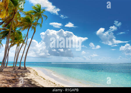 Blue sky,coconuts trees,  turquoise water and golden sand, Caravelle beach, Saint Anne, Guadeloupe, French West Indies. - Stock Image