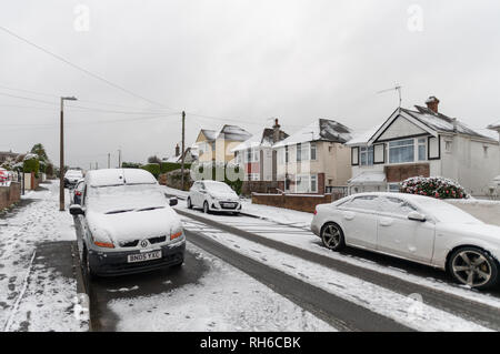Poole, UK. 1st February 2019. There's snow even in Poole in Dorset, on the south coast of England. Snow in suburbia and on trees. Credit: Thomas Faull/Alamy Live News - Stock Image