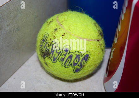 dog toy, tennis ball, coke can - Stock Image