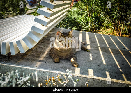 A tabby cat with beautiful light green eyes sits under a bench at the Riva Promenade in Split Croatia - Stock Image