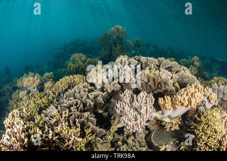 Healthy Coral Reef, Lissenung, New Ireland, Papua New Guinea - Stock Image