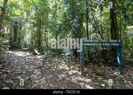 Walking trail to Nandroya Falls in Wooroonooran National Park, Far North Queensland, FNQ, QLD, Australia - Stock Image