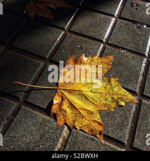 Orange leaf on a wet pavement in Barcelona city, Catalonia - Stock Image