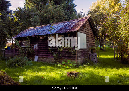 Large old timber built garden shed with a corrugated iron roof in a North Yorkshire Orchard in autumn - Stock Image