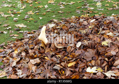 Gruesome Halloween decoration of a plastic human foot protruding from a pile of autumn leaves - Stock Image