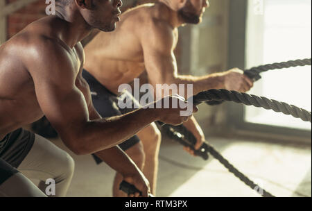 Two muscular multiracial athletes working out with battling ropes in front of brick wall. Determination. Working hard on strength and endurance. Focus - Stock Image
