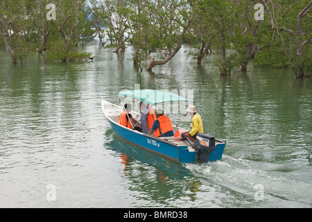 Tourist boat in a mangrove swamp, Bako National Park, Borneo - Stock Image