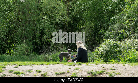 Young lady resting in park with Whippet dog  Milton Cambridge 2019 - Stock Image