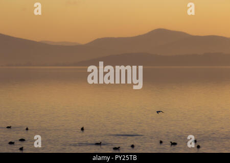Beautiful view of a lake at sunset, with orange tones and birds flying and on water - Stock Image