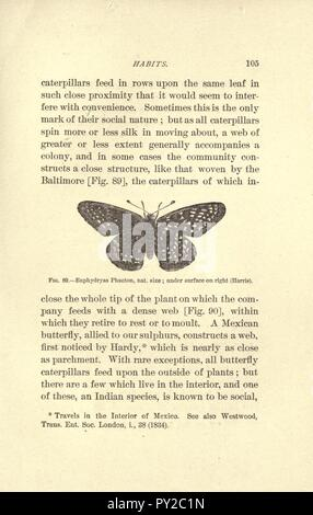Butterflies (Page 105) - Stock Image