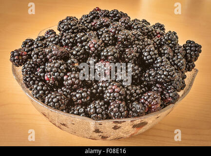 A bowl full of freshly-picked blackberries from the wild - Stock Image