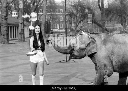 Strange tales of London. Beauty Queens (who will be in the pancake race on Tuesday) and baby elephant Minoti - she is five, but for an elephant that is a baby. February 1975 75-00776-008 - Stock Image