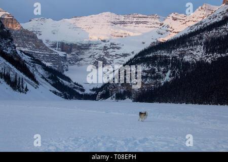 Ice Rink Lake Louise Chateau winter Alberta Canada - Stock Image