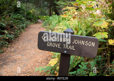 Lady Bird Johnson Trail in the California Redwoods National Park in the Northwest corner of the state. - Stock Image