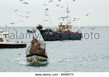 Fishing boat surrounded by seagulls - Stock Image