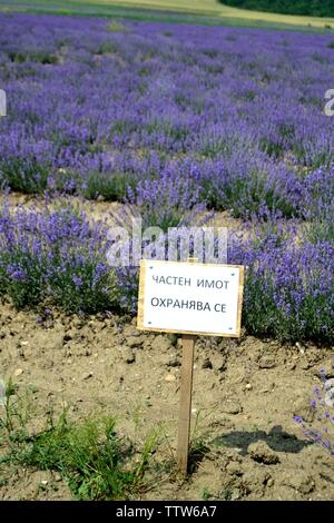Lavender field -Valley of the Thracian Kings in Kazanlak- Province of Stara Zagora.BULGARIA - Stock Image