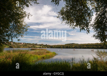 A view of wetland habitat through willow trees from 'Charlie's Hide' at RSPB  Fairburn Ings, Castleford, - Stock Image