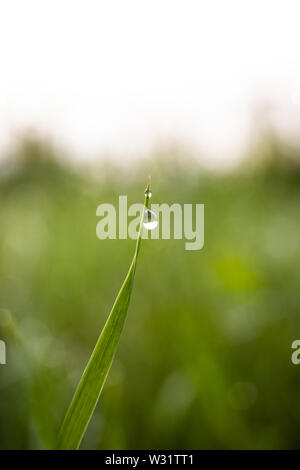 A single dew drop on a blade of green grass - Stock Image
