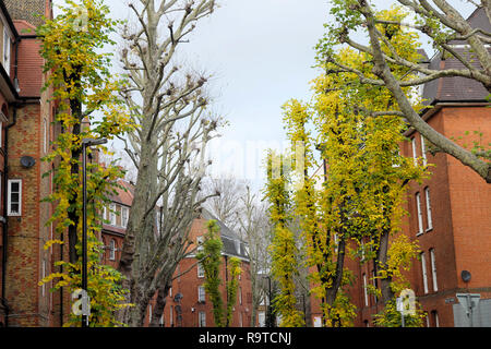 Autumn leaves on trees lining Montclare Street near Redchurch St.  in Shoreditch East London E1 UK   KATHY DEWITT - Stock Image