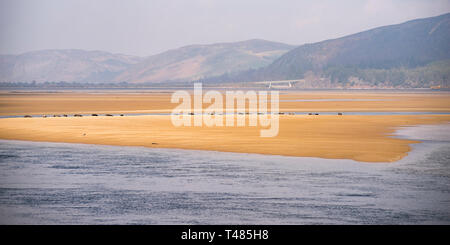 Looking Across Loch Fleet towards the Mound and the A9, Sutherland, Scotland, UK - Stock Image