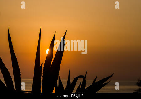American Agave leaves against a warm sunrise sky and seascape - Stock Image