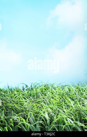 Green grass and beautiful blue sky with white wispy clouds and sunlight. Great for backgrounds and environmental concepts - Stock Image