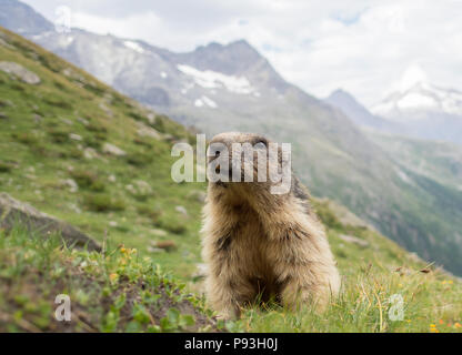 The mountain king - Stock Image