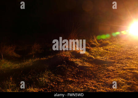 Night picture of a dirt road with grass headlights of a car and flash. - Stock Image