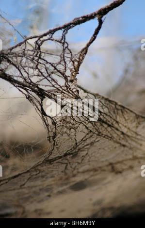 Thick dusty old cobweb - Stock Image